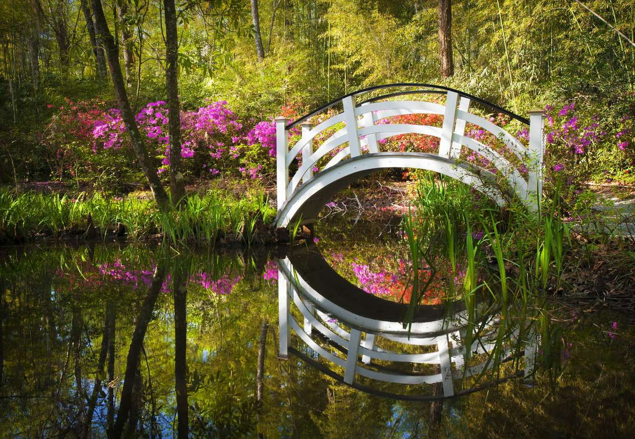 Kwitnący park w Charleston (USA) -  (13×9)