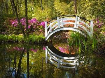 Kwitnący park w Charleston (USA)
