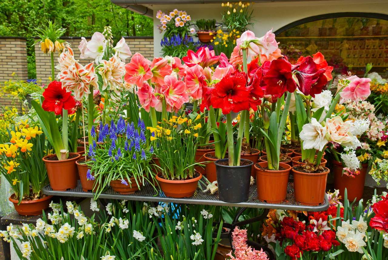Kwiaty doniczkowe - Przy uprawie kwiatów doniczkowych należy zwrócić uwagę przede wszystkim na ich potrzeby względem intensywności światła słonecznego. Jest to warunek konieczny, aby chociaż częściowo imitow (16×11)