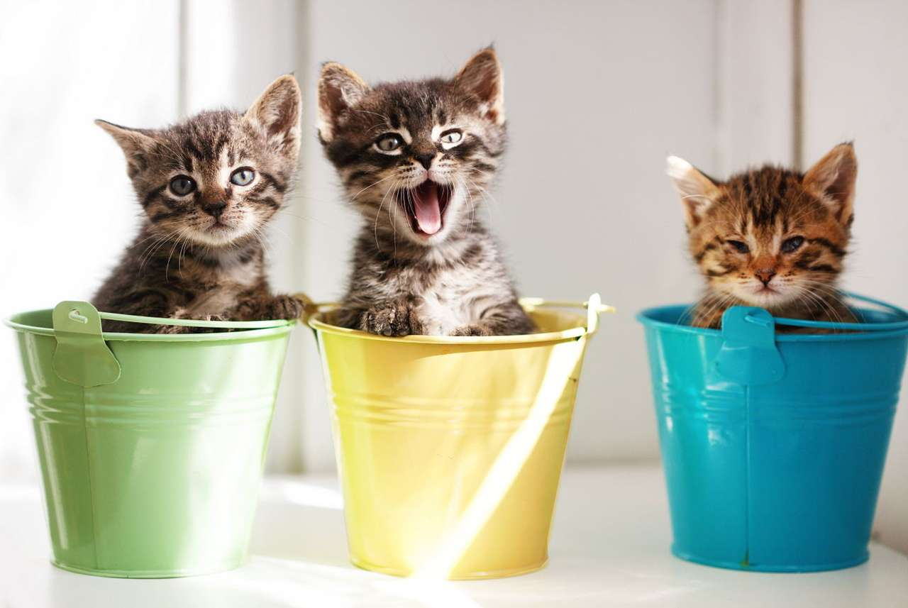 Trzy małe kocięta