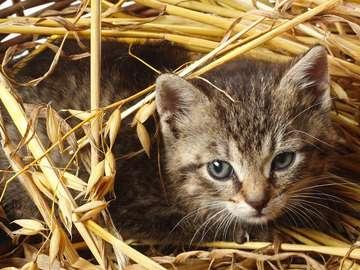 Kotek schowany w słomie