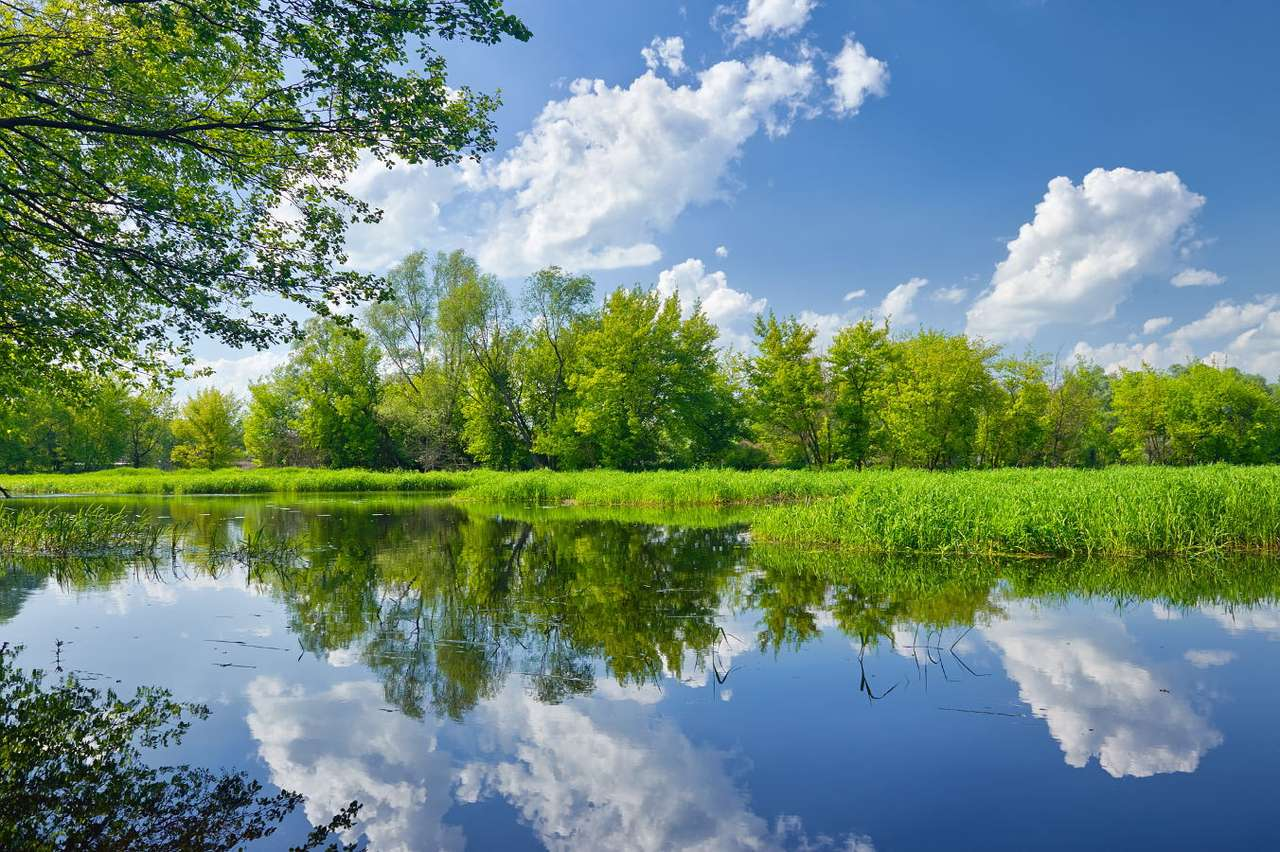 Rzeka Narew puzzle ze zdjęcia