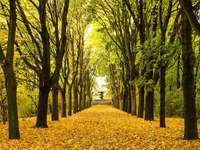 Aleja parkowa jesienią