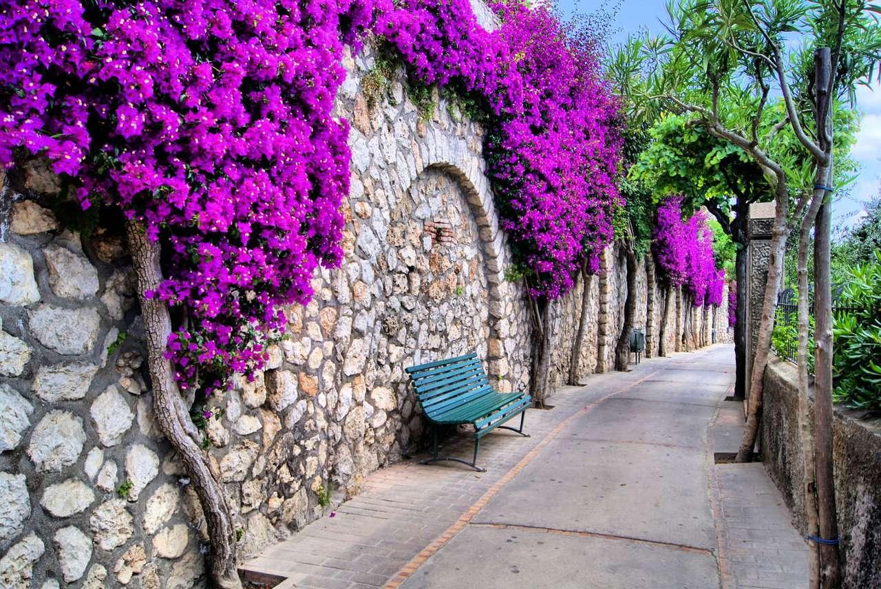 Fioletowe bugenwille na Capri (Włochy) - Capri to włoska miejscowość położona w regionie Kampania. Zlokalizowana jest na górzystej wyspie o tej samej nazwie, która leży na Morzu Tyrreńskim w Zatoce Neapolitańskej, nieopodal półwy (10×7)