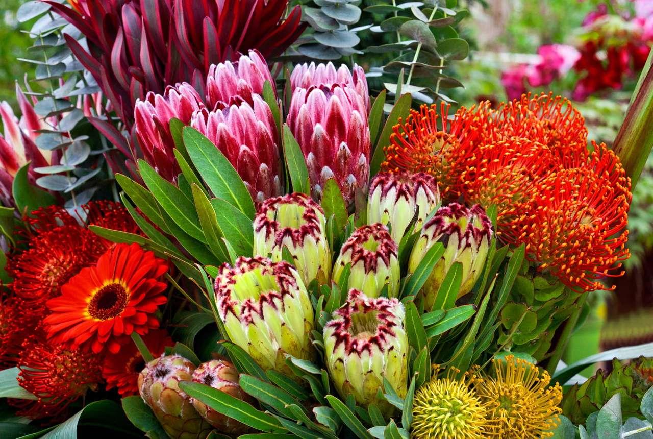 Bukiet czerwonych i różowych kwiatów - Czerwone i różowe zabarwienie płatków kwiatów jest dosyć popularne, a kwiatostany w tych kolorach występują u wielu gatunków roślin. Są także bardzo doceniane przez ogrodników, ponieważ (13×10)