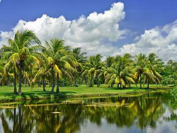 Tropikalny ogród botaniczny Fairchild (USA)