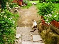 Podwórkowe koty puzzle ze zdjęcia