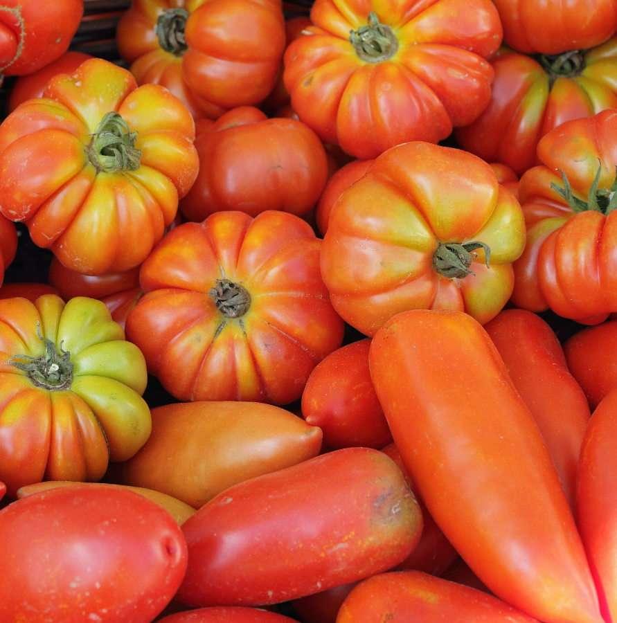 Różne gatunki pomidorów