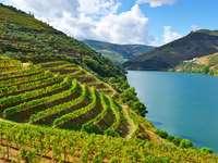 Winnice w dolinie rzeki Douro (Portugalia)