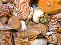 Kompozycja z morskich muszli