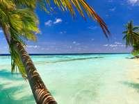 Rajska plaża z białym piaskiem (Malediwy)