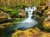 Górski potok w Parku Narodowym Retezat (Rumunia)