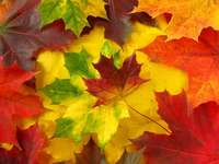 Kolorowe jesienne liście