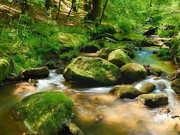 Kamienie w leśnym potoku