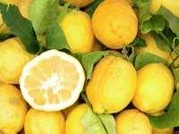 Cytryny z Sorrento