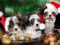 Świąteczne szczeniaki