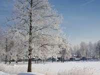 Zimowy spacer puzzle ze zdjęcia