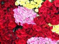 Bukiety róż