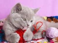 Kociak z kłębkiem wełny
