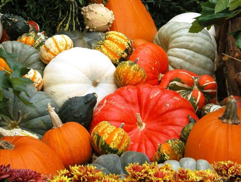 jesenne dynie