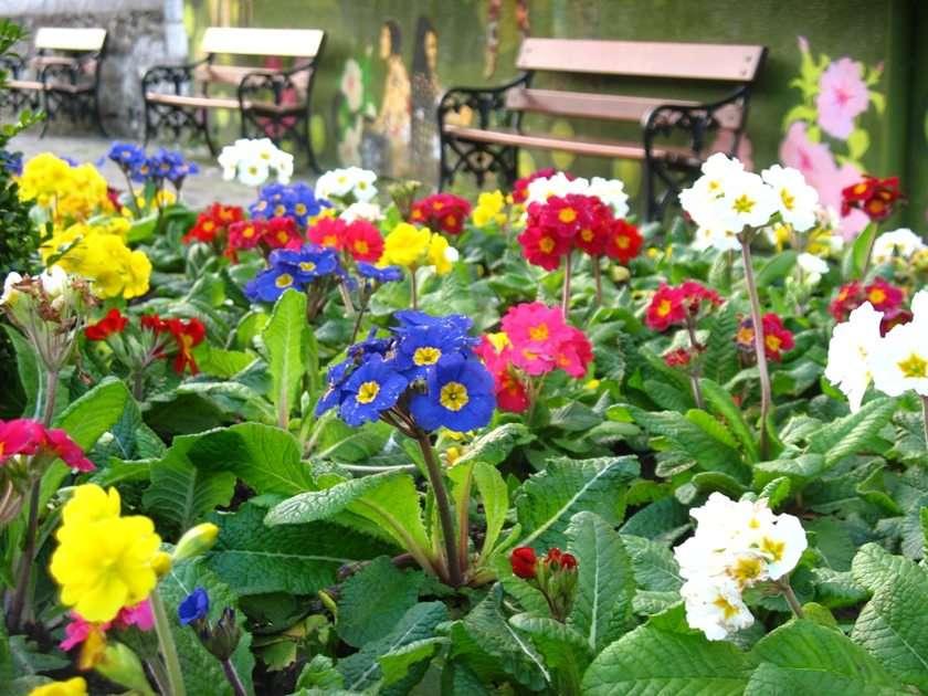kwiatki6 puzzle online