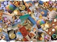 Muszle morskie puzzle online