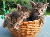Maluszki w koszyczku