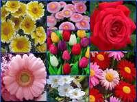 Kwiaty puzzle online