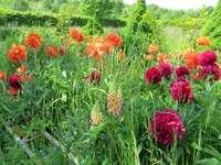 Zdziczały ogród