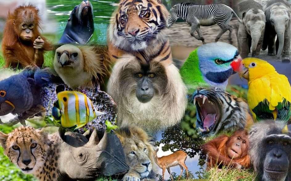Indonezyjskie Zwierzęta puzzle online
