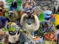 Indonezyjskie Zwierzęta