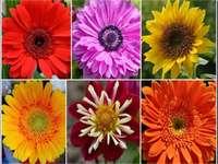 Kwiaty puzzle