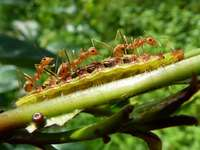 La fábula de la hormiga y la oruga