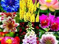 Kwiatki puzzle online