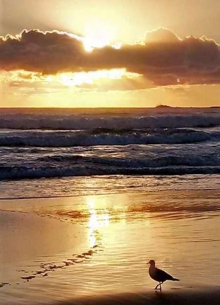 Wschód słońca w Fingal Head, Australia puzzle online