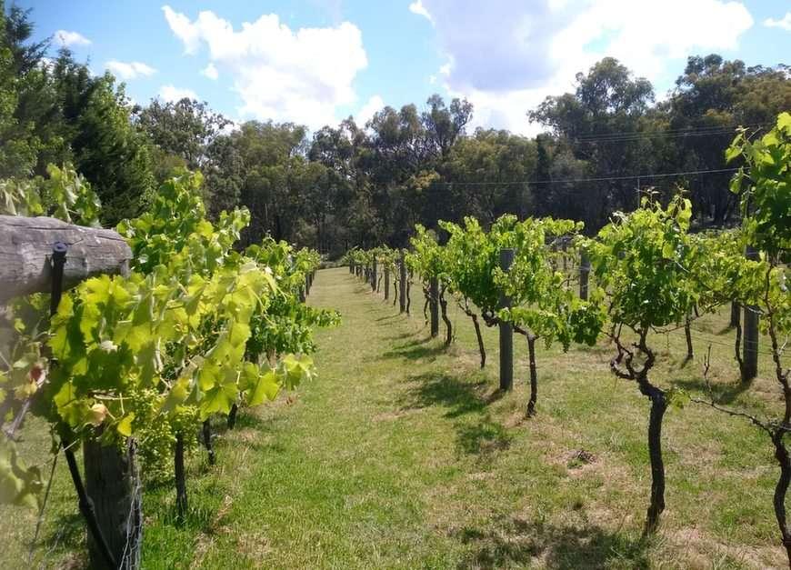 Winnica w pobliżu Stanthorpe, QLD