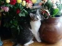 Poli wśród kwiatów puzzle ze zdjęcia