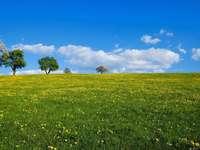 Kwitnąca łąka.