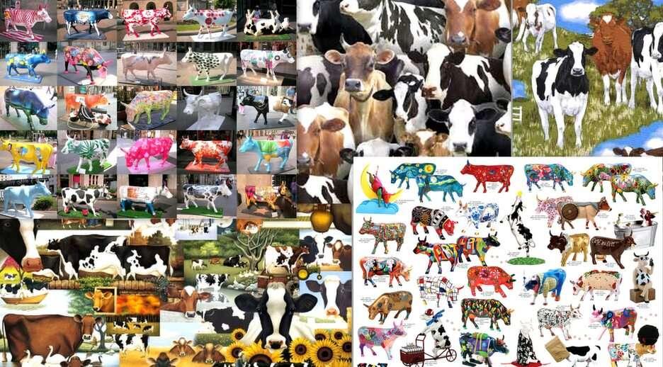 collage z krowami