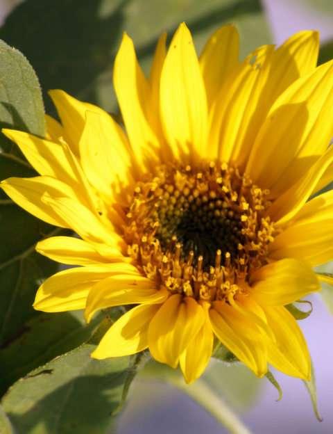 kwiat puzzle online