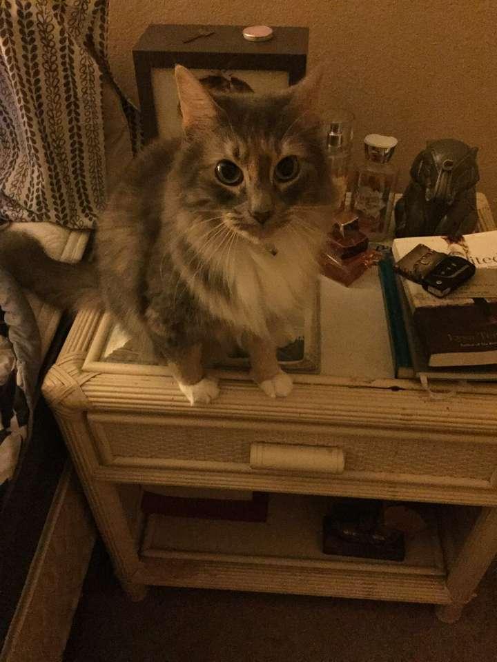 Kit Kat Kat