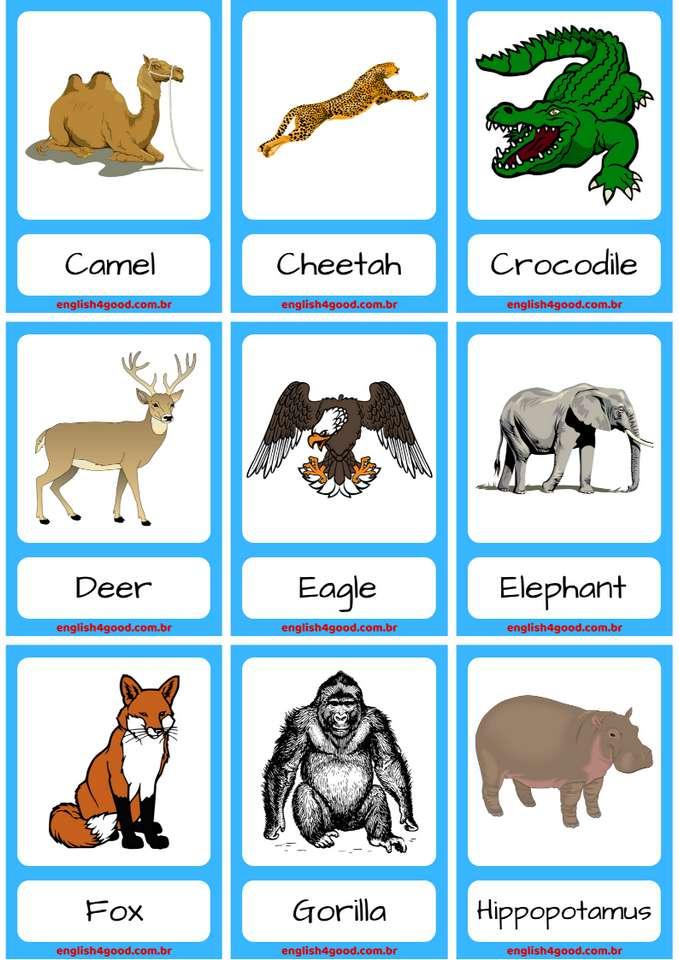 Zwierzęta - słownictwo