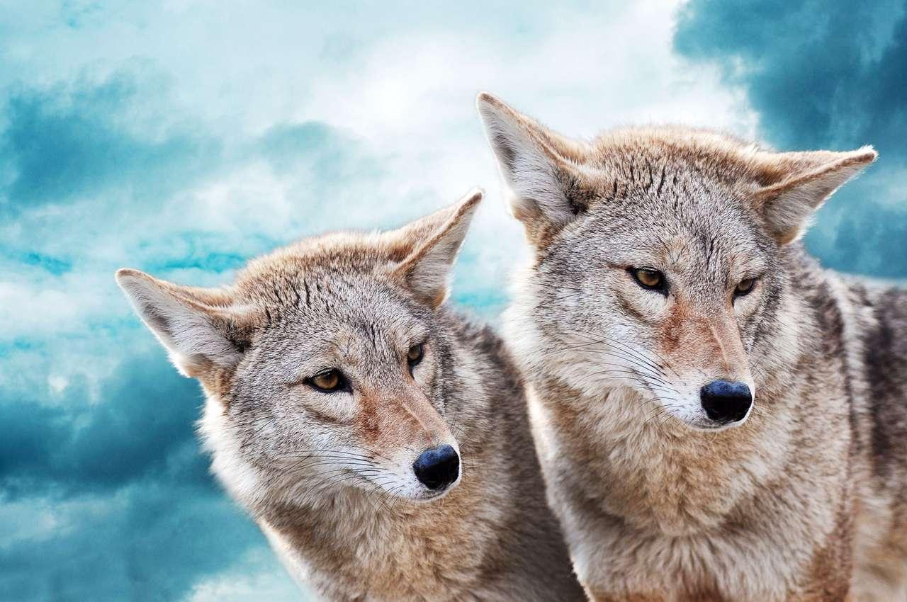 Dwa białe wilki