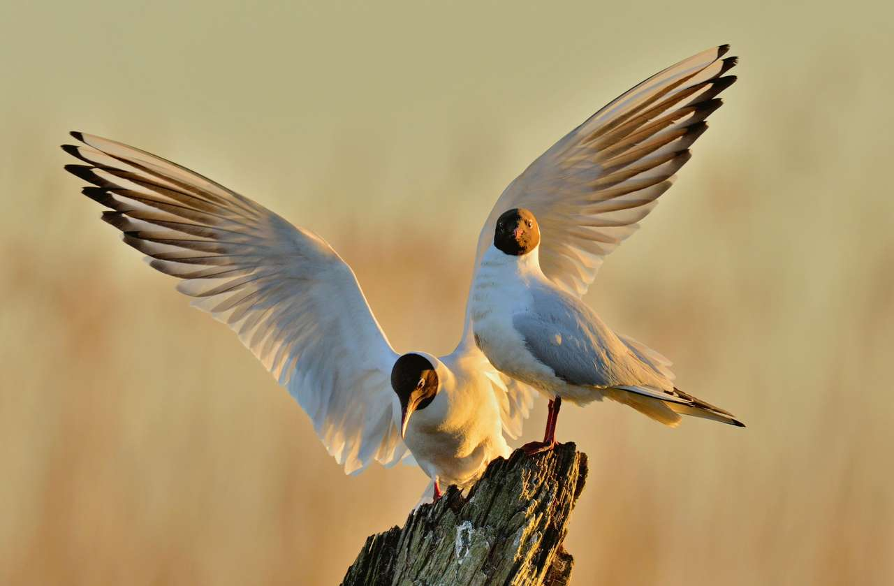 Ptaszki sobie siedzą