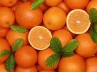Zbiory pomarańczy