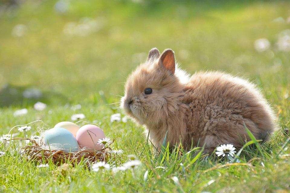 Puzzle Wielkanoc