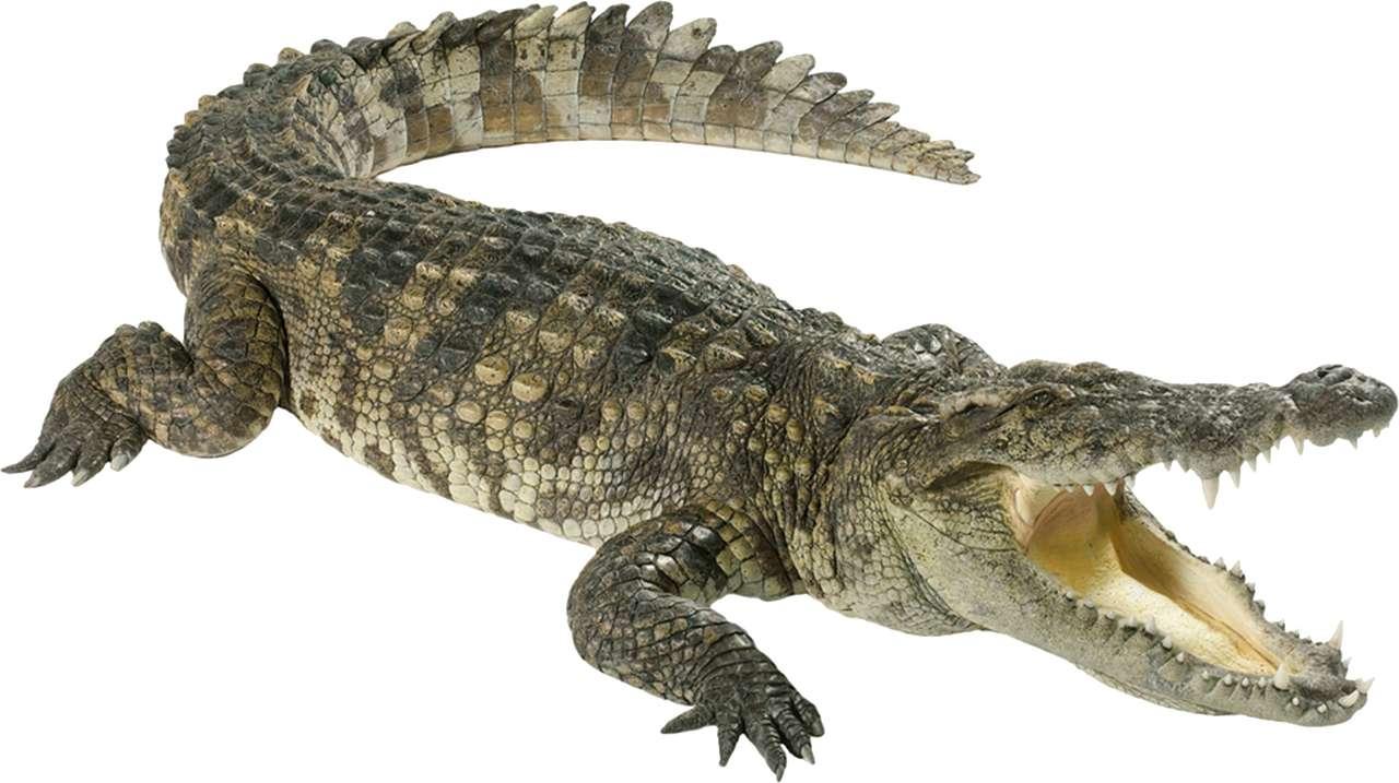 Hello Alligator Puzzle.