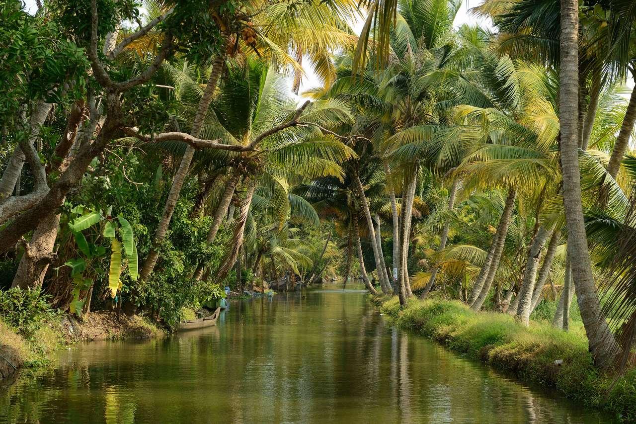 Rzeka i palmy