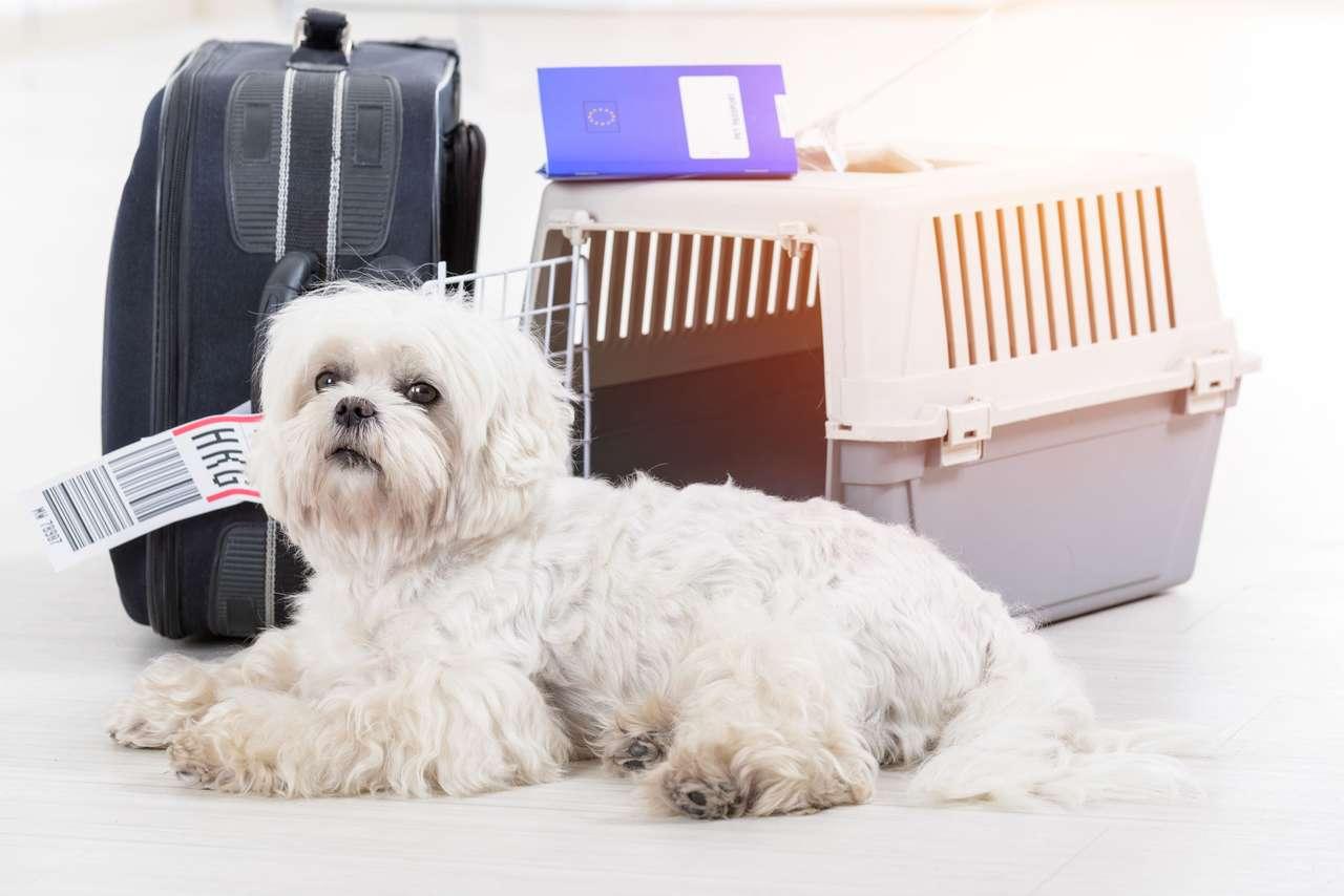 Pies na wakacjach puzzle