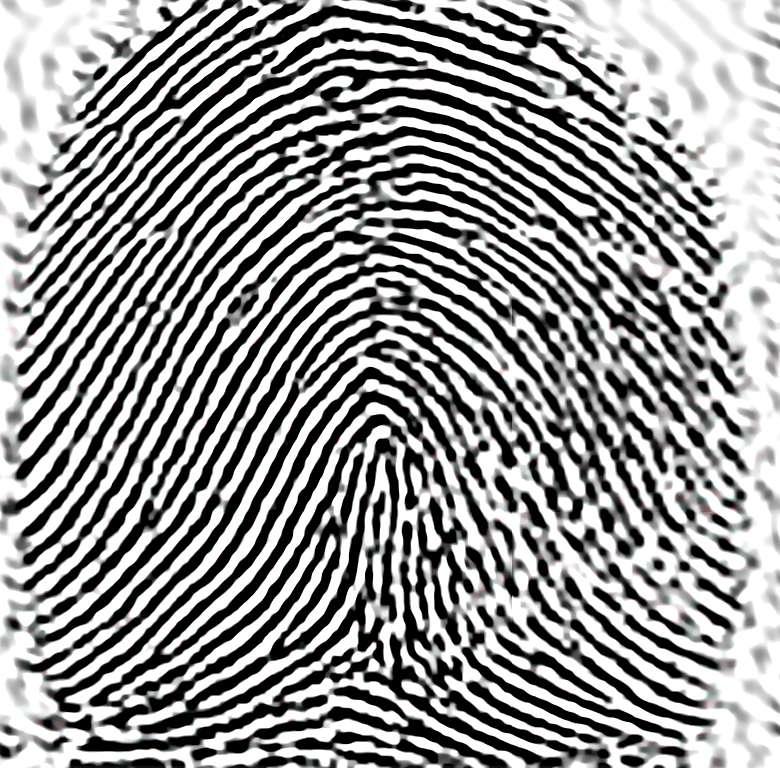 Fingerprint puzzle